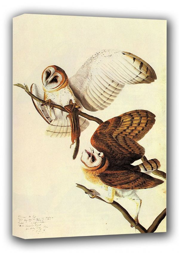 Audubon, John James: Barn Owls. (Ornothology/Bird) Fine Art Canvas. Sizes: A3/A2/A1 (001008)